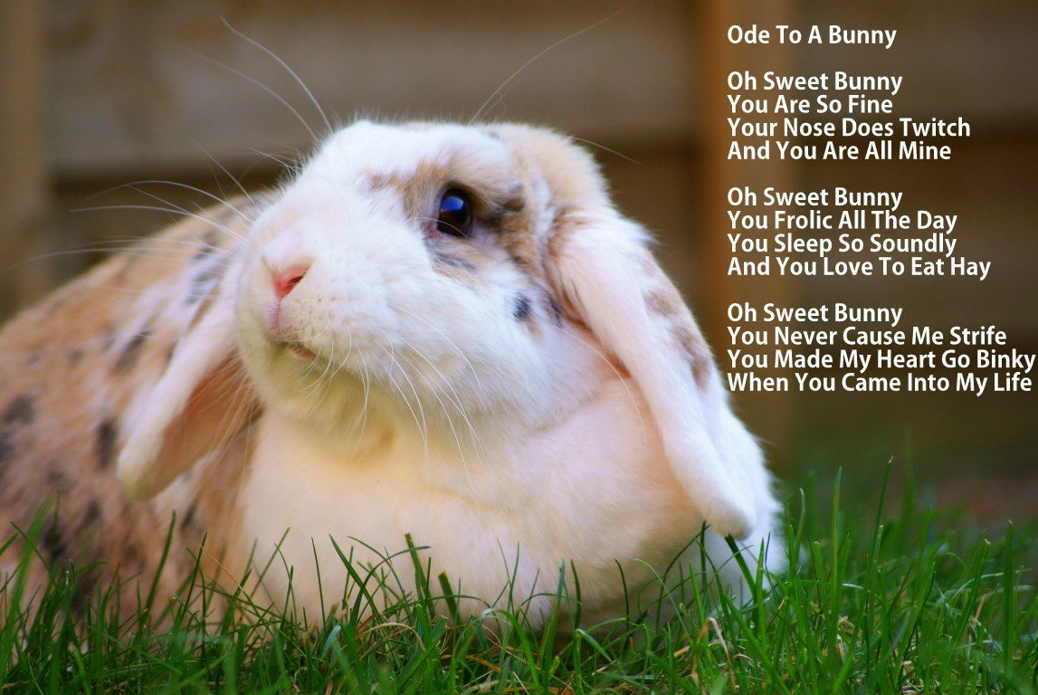 Ode To A Bunny Bunny Mom Pets Animals
