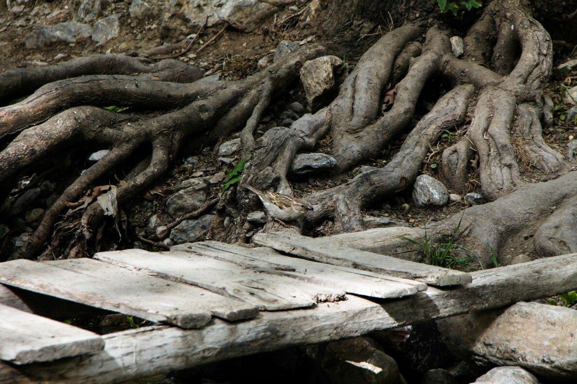 ۱۳۹۱ سراب گیان این چشمه در شهرستان نهاوند و ۱۸ کیلومتری جنوب غربی شهر نهاوند و ۲ کیلومتری تپه باستانی کیان و در شمال شهر گیانقرار گر Wood Pictures Firewood