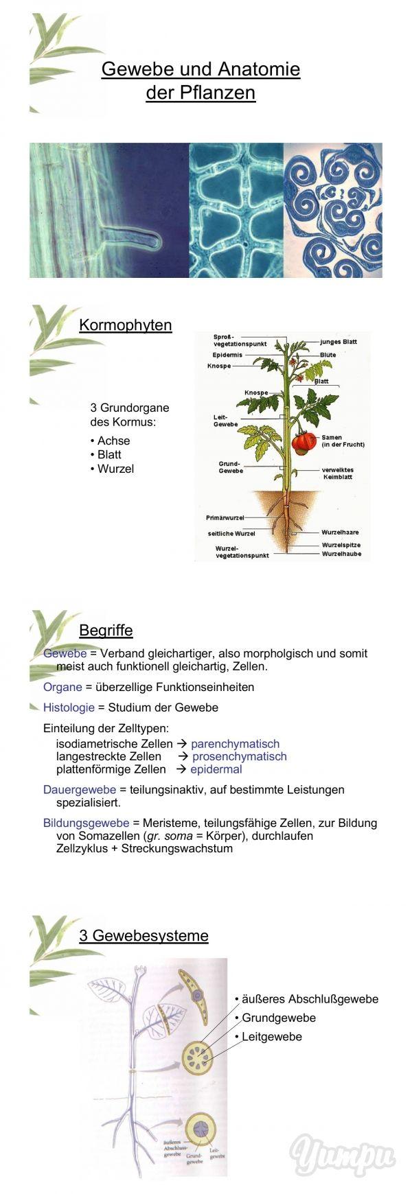 Gewebe und Anatomie der Pflanze - Magazine with 39 pages: Gewebe und ...