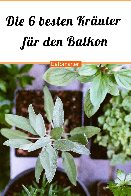 Die 6 besten Kräuter für den Balkon #kräutergartenbalkon