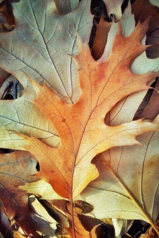 Foglie foglie foglie