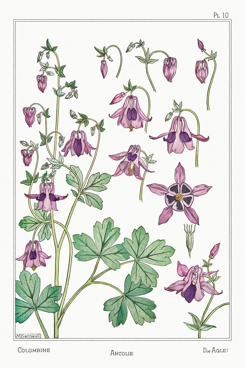 Pin On Vintage Botanical Art