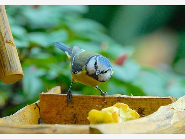 So Locken Sie Vogel In Ihren Garten Vogel Im Garten Garten Locken Machen