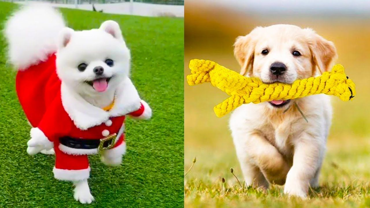 Baby Dogs Cute And Funny Dog Videos Compilation Https Www Youtube Com Watch V M3udwmiypyg Babydogs In 2020 Baby Animal Videos Baby Dogs Cute Baby Dogs