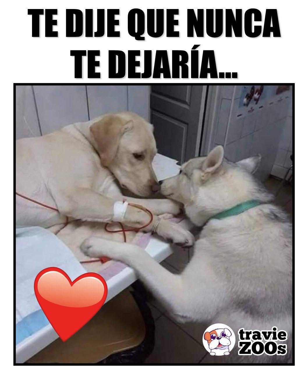 La Imagen Puede Contener Perro Y Texto Animales Perros Perros Tristes Animales Frases