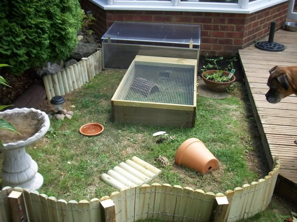tortoise outdoor enclosure information page 7 reptile forums