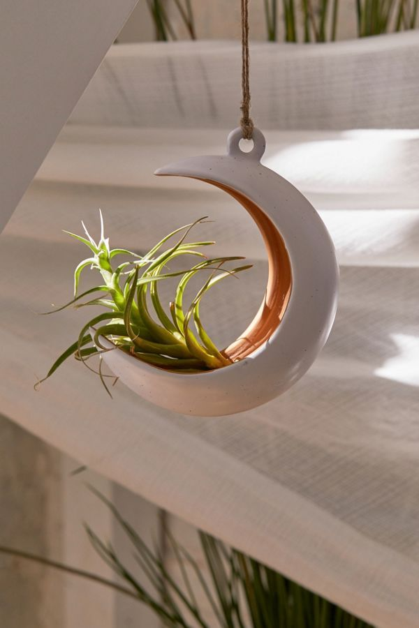 Crescent Moon Hanging Air Plant Holder