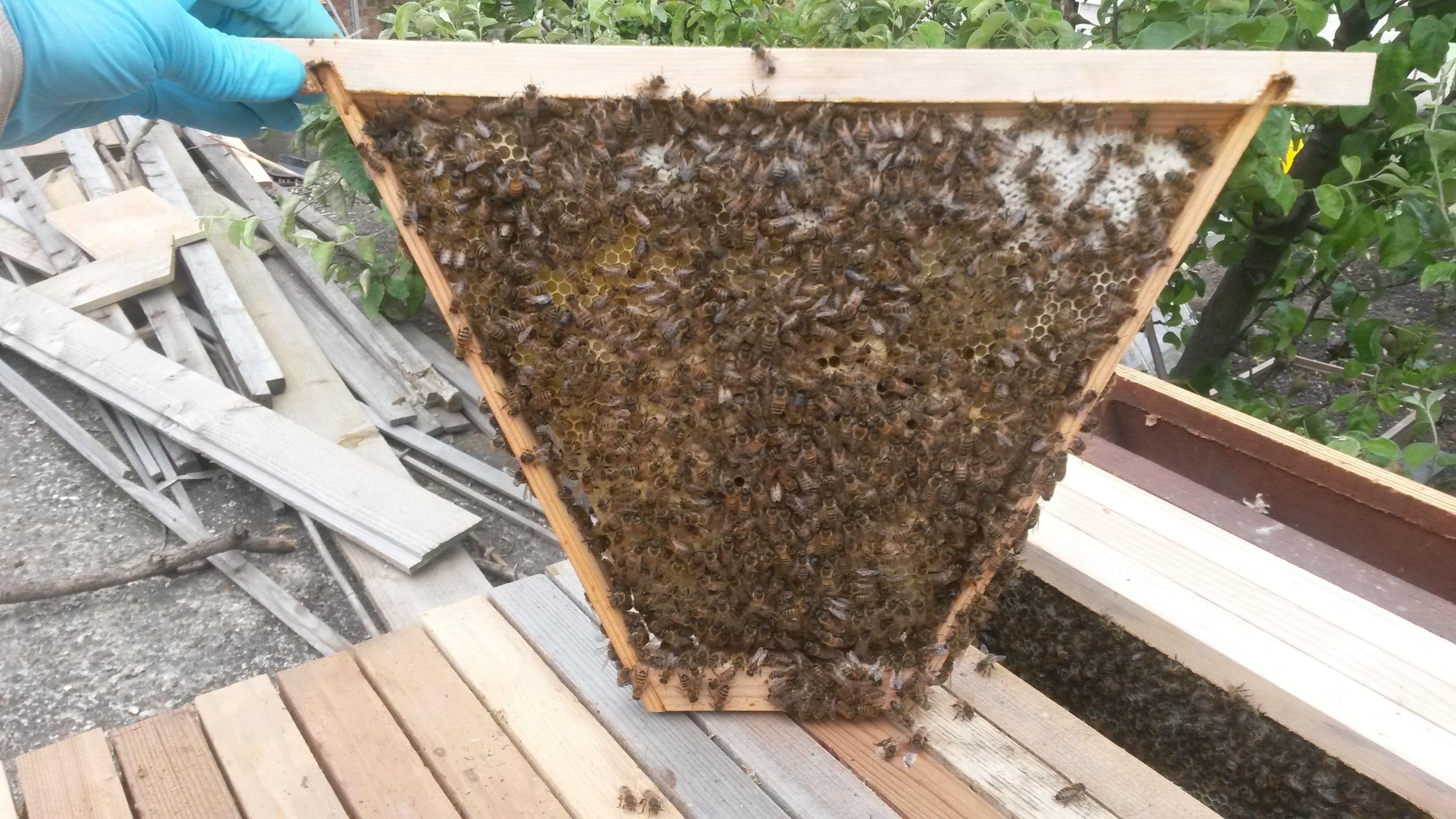 Top Bar Hive Frames