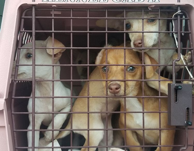 Rescue Program Helps 700 Pets In Overcrowded Shelters Find Forever Homes For Valentine S Day People With Images