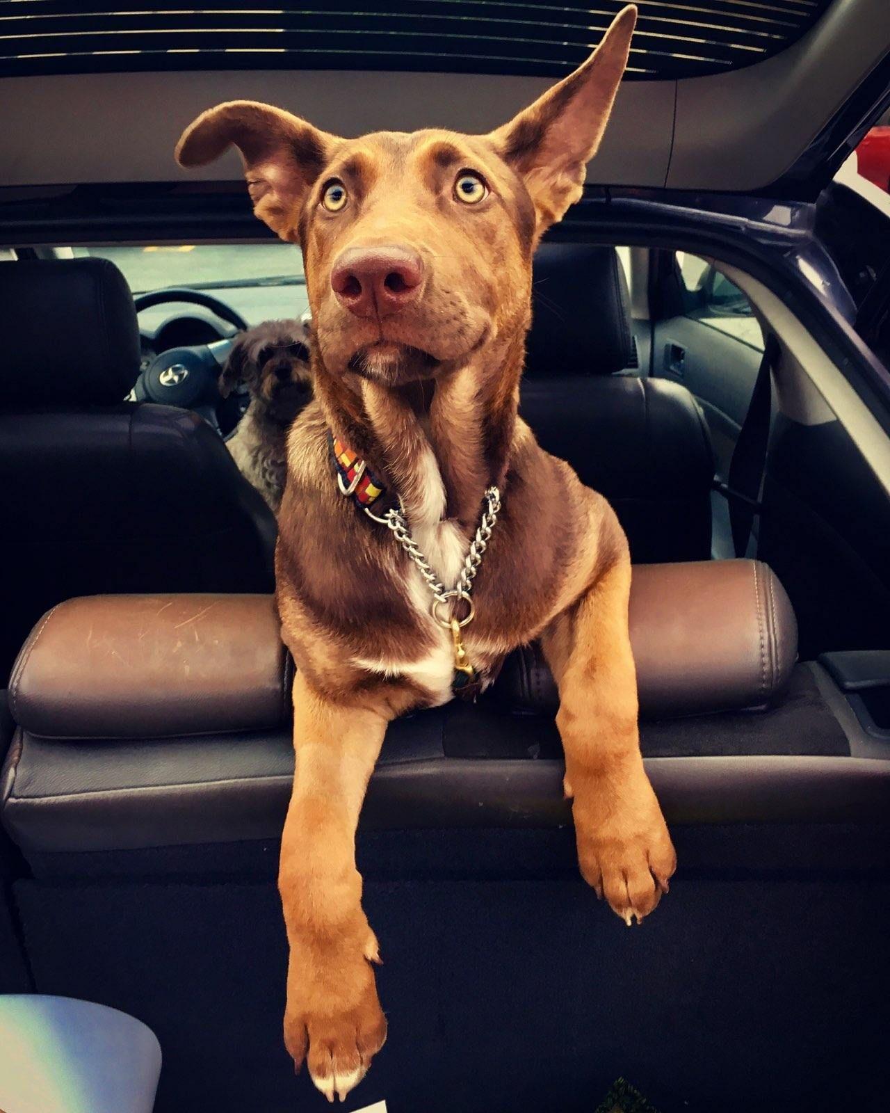 Adopt Coco On Petfinder Dog Adoption Dog Activities Ship Dog