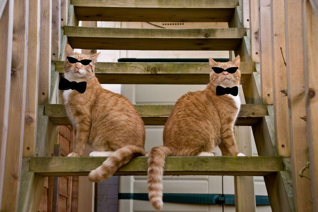 Cosmo & Jessie - We are da management!