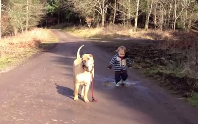 Image Result For Boy Walking Dog Cartoon Boy Walking Cartoon Dog Dog Walking