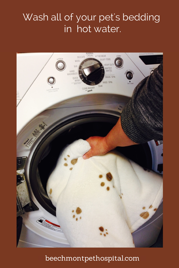 Wash all of your pet's bedding in hot water. If your pet