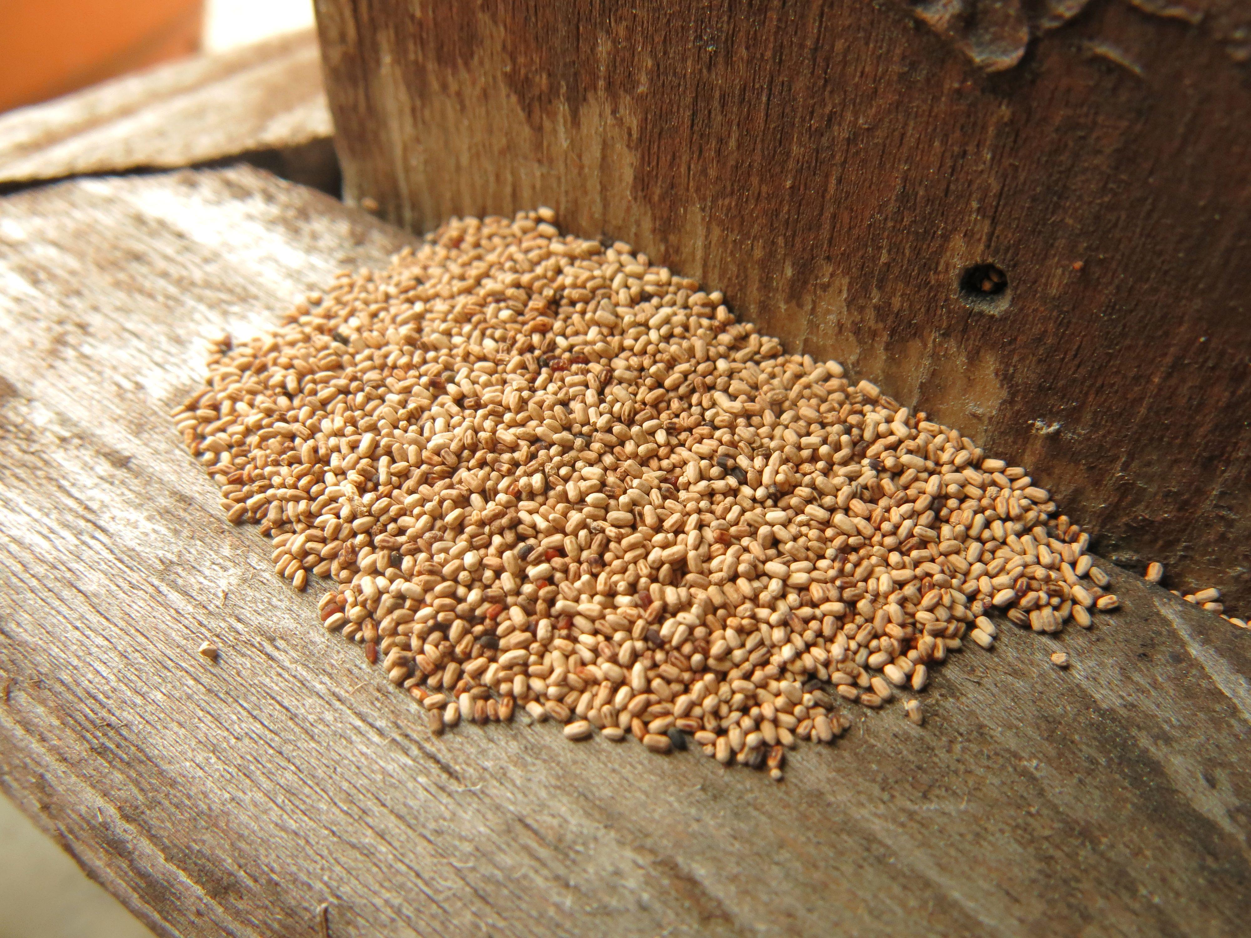 Termite Damage Pictures Termite Damage Termite Control Termites
