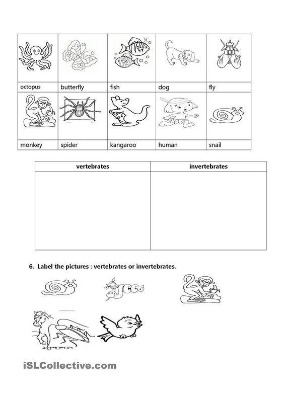 Vertebrates And Invertebrates Jp Science Vertebrates