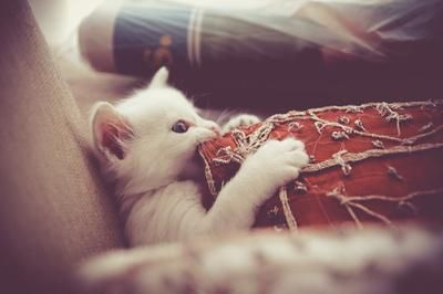 Me watching a scary movie. via @EmrgencyKittens