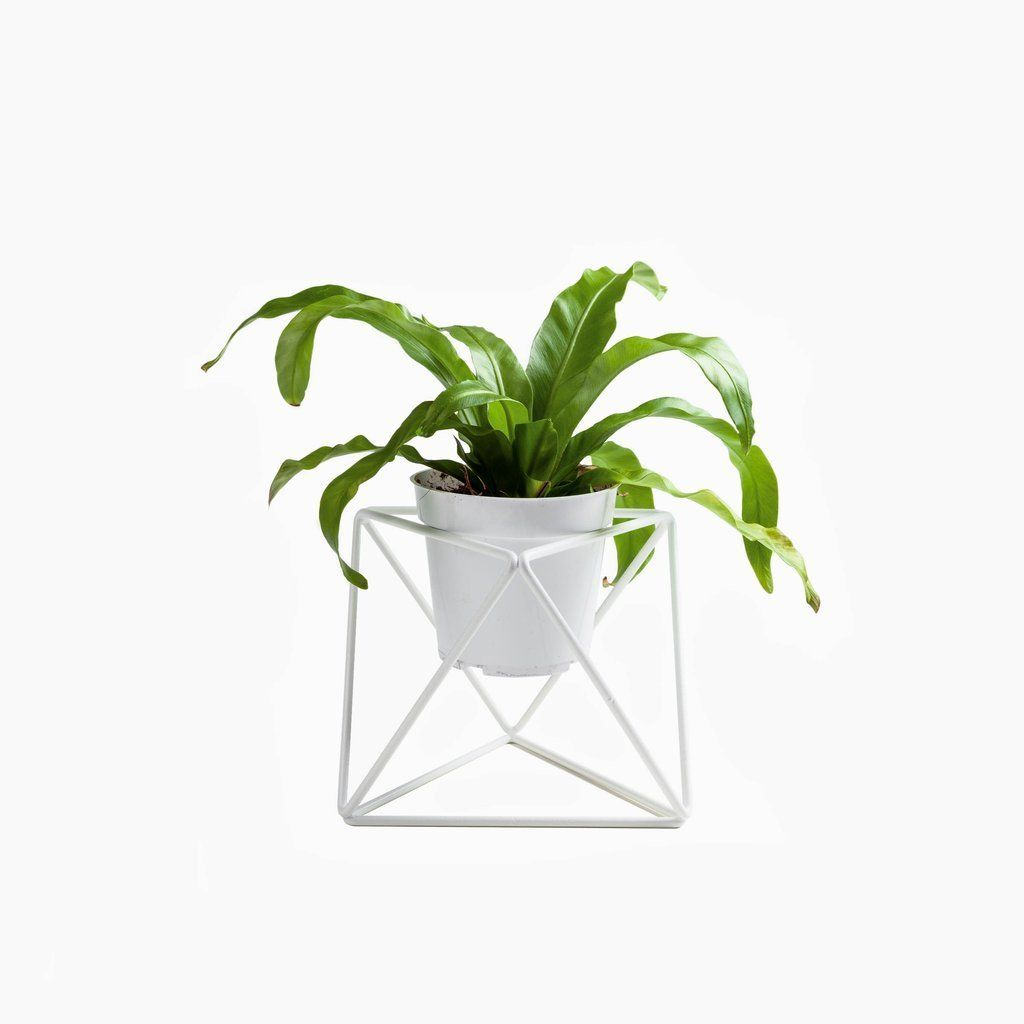 45 modern pots and planters to instantly upgrade your