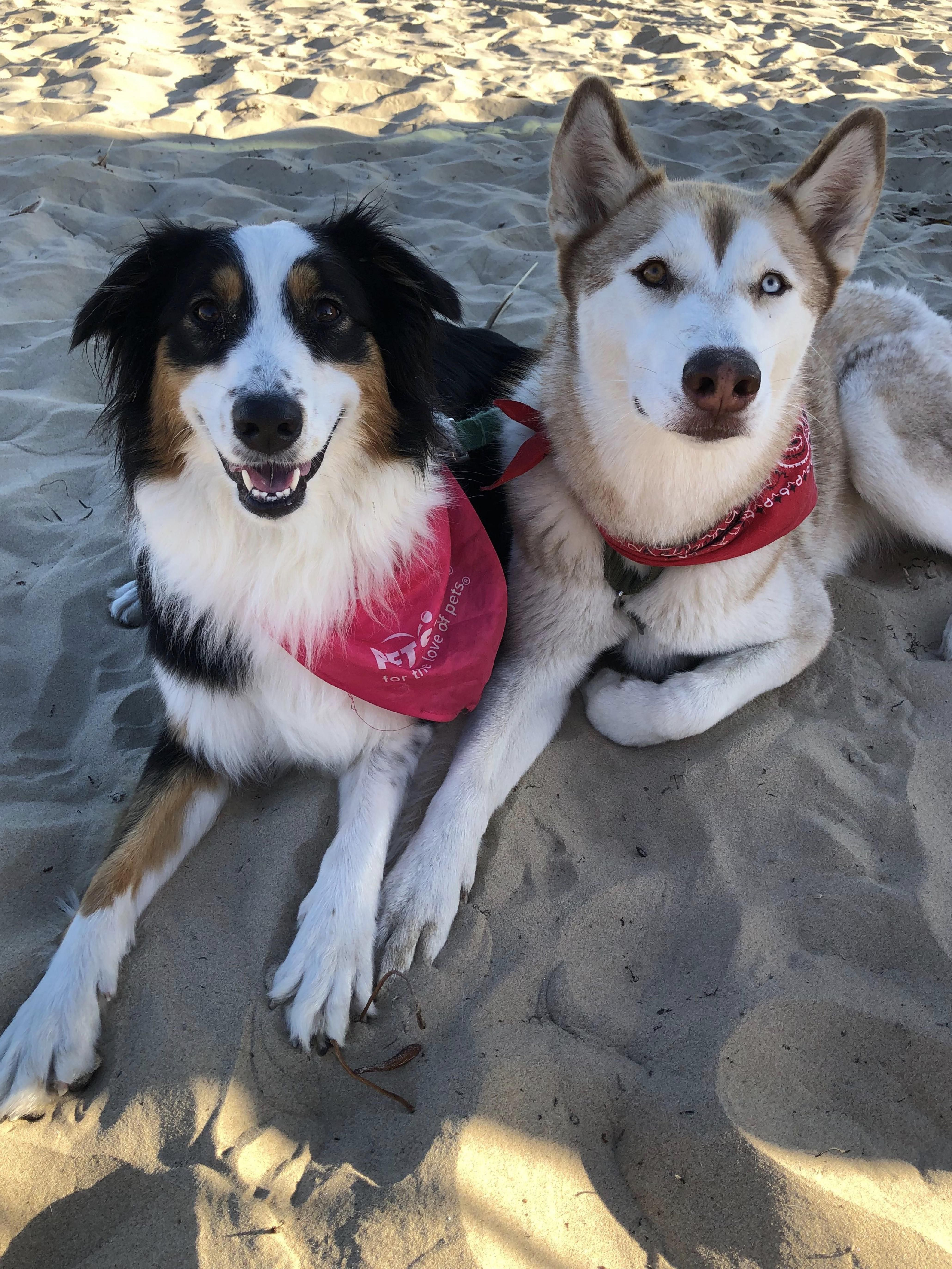 Roxy Enjoying The Beach With Her Best Friend Finn