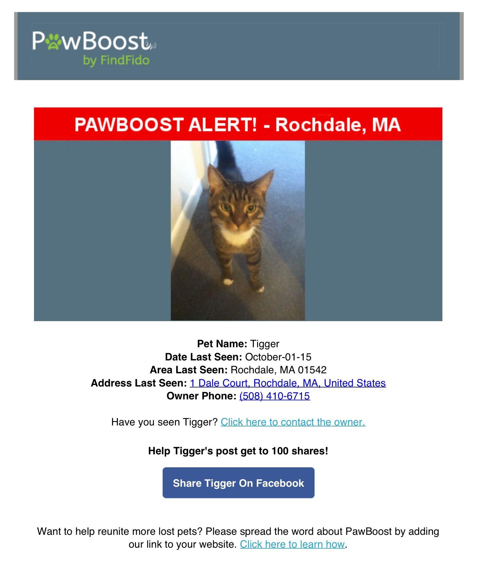 Lost Cat Named Tigger Rochdale Ma Pet Names Lost Cat Cat Names