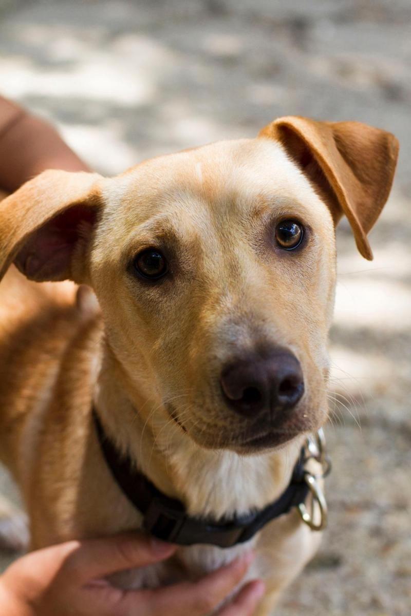 Adopt Chesney On Petfinder Dog Adoption Animal Welfare Society Pet Adoption