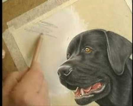 Background for a Black Labrador - YouTube