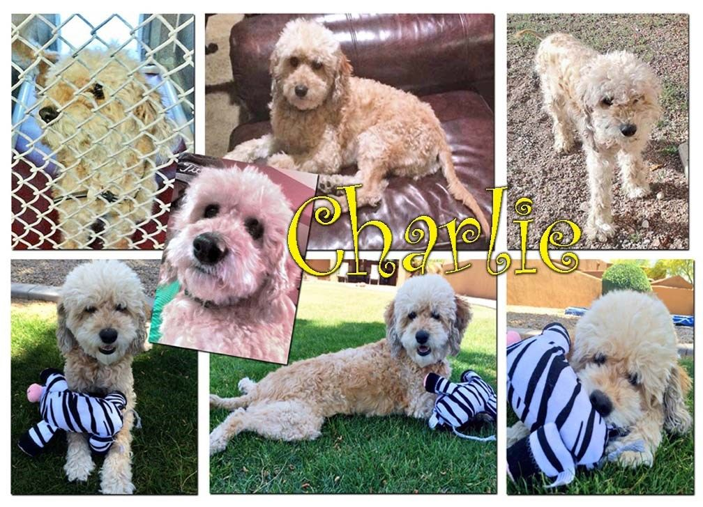 Charlie And The Nebraska 4 Need Your Help Pets Animals