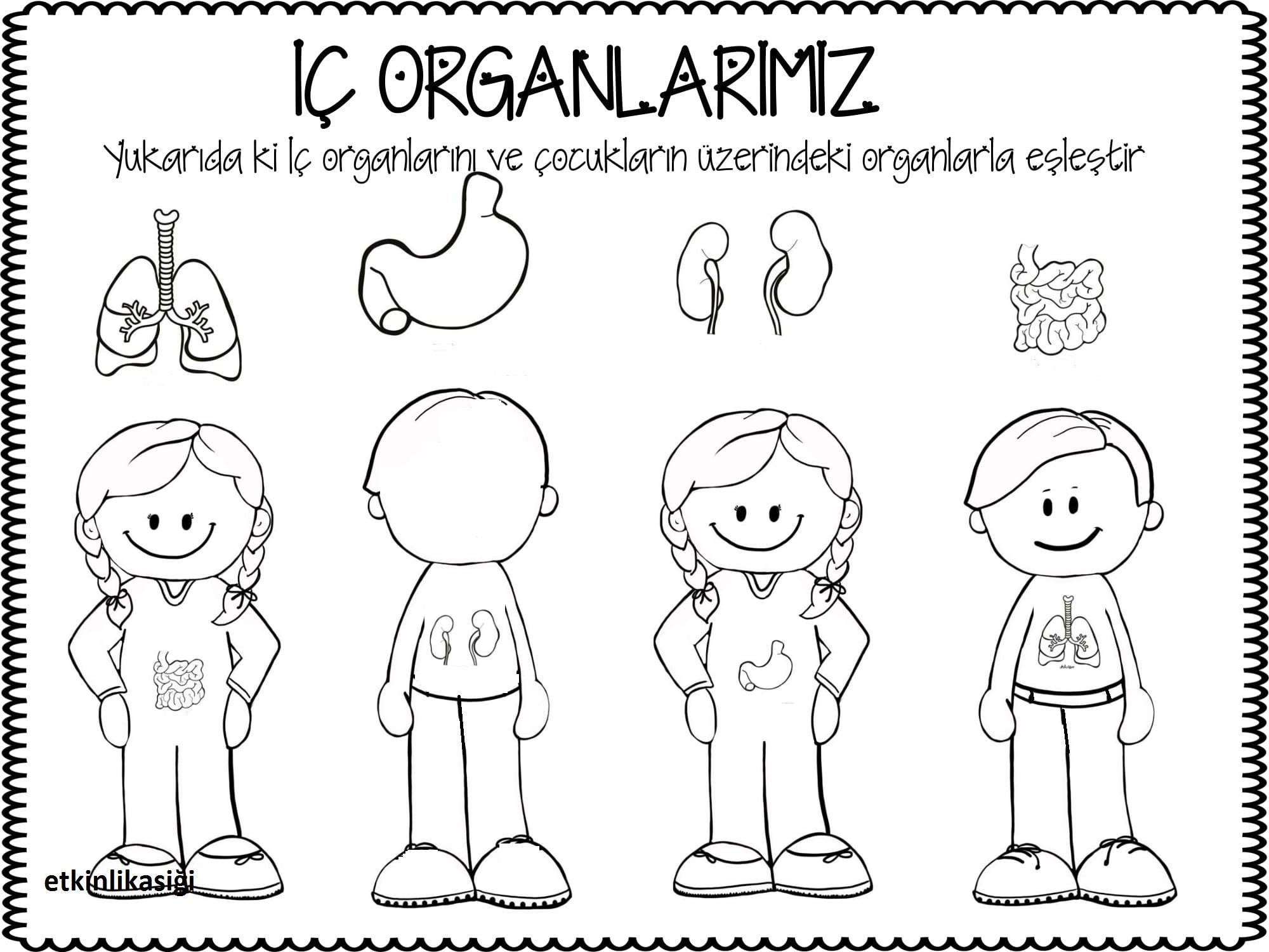 Iç Organlarim Etkinlikasigi Working Pages School Worksheets