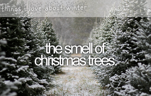 things i love about winterthat christmas tree smell - Christmas Tree Smell