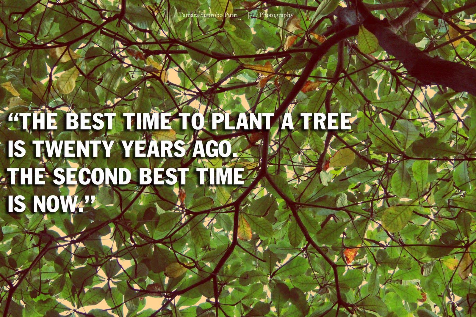 quotes about rainforest | deforestation definition | ✿~nature