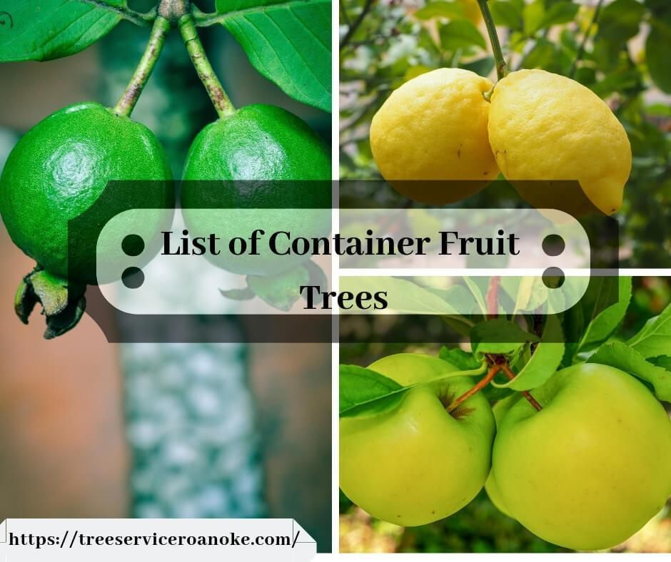 Major Ideas To Plant Fruit Trees In Pots Potted Trees Fruit Trees Planting Fruit Trees