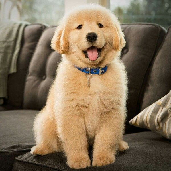 Such A Little Floofball Baby Dogs Cute Little Animals Puppies