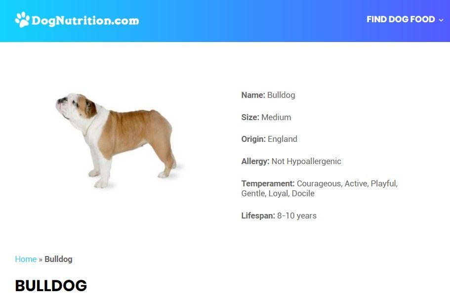 Bulldog Dog Breed Information Dog Breeds Dogs Bulldog Breeds
