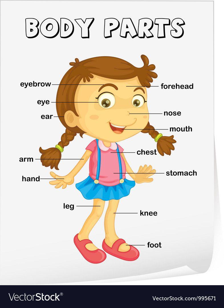 Body Parts Diagram For Kindergarten : parts, diagram, kindergarten, Picture