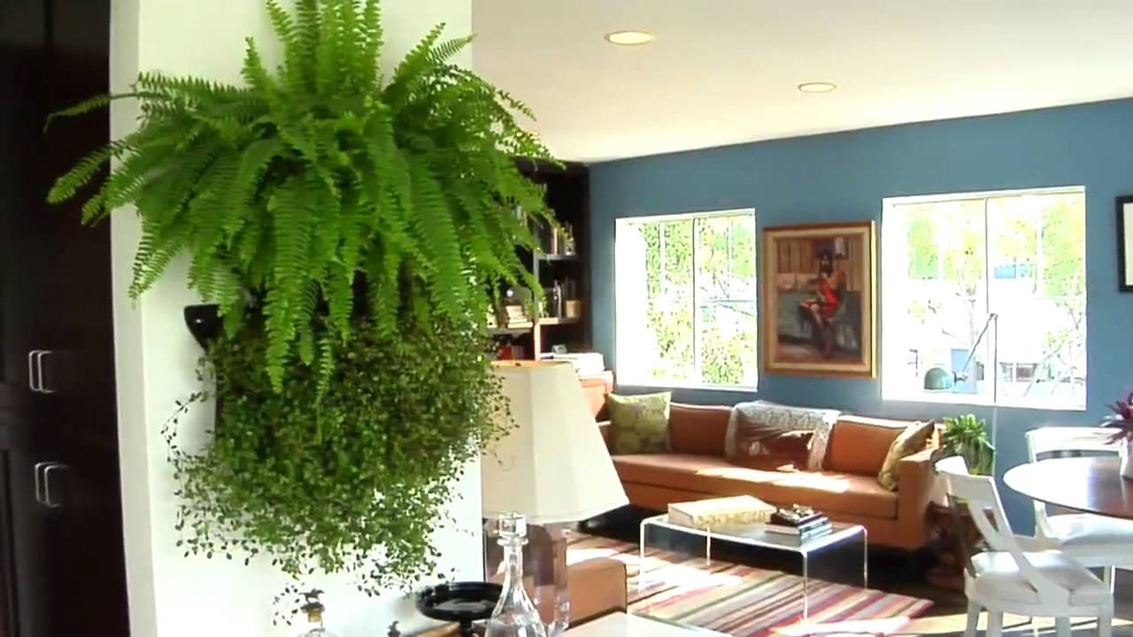 Learn How to Make Your Own Living Wall (With images