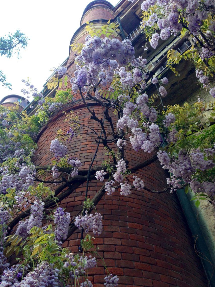 Botanical Garden_ Brera Botanical gardens, City photo