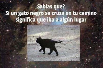 Funny Memes Zumba : Pin by ramses on humor memes gamberradas memes and