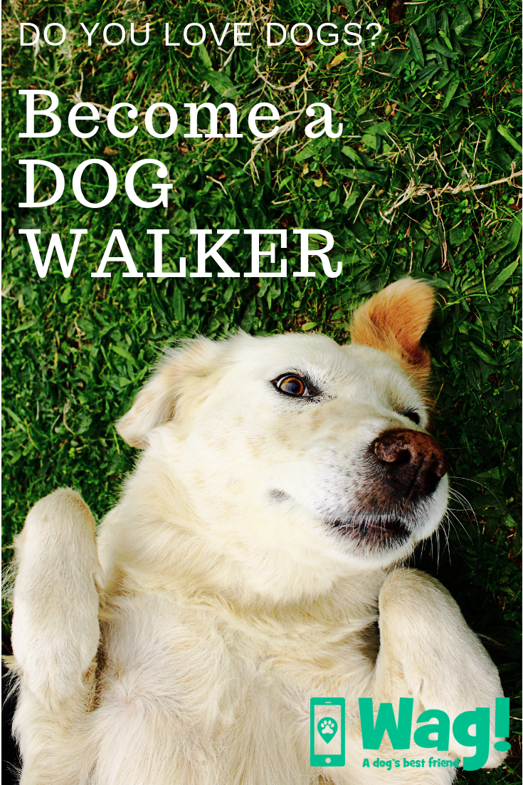 Become A Dog Walker With Wag Dog Walker Dogs Dog Activities