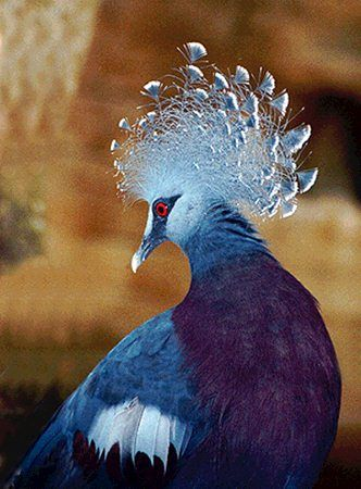 Rare Tropical Birds Native To Irian Jaya This Bird Used