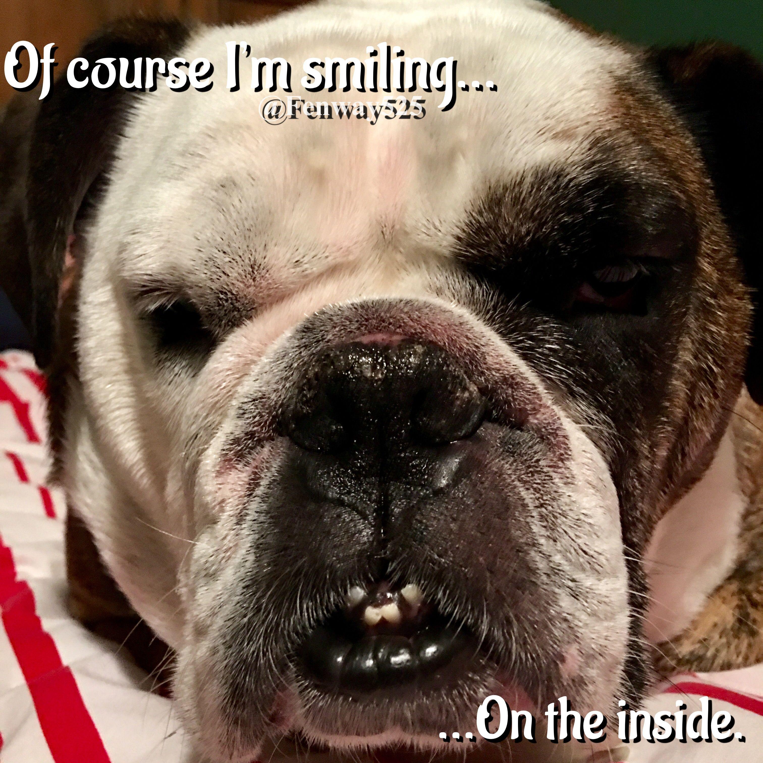 when will a french bulldog puppy sleep through the night