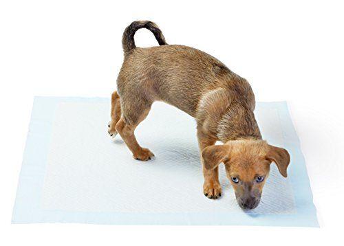 Amazonbasics Puppy Training Pads Review Testing Video Puppy Pads Training Puppy Pads Puppies
