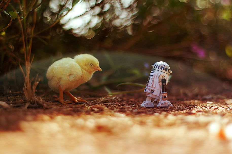 Adorable Adventures Of Miniature Star Wars Characters