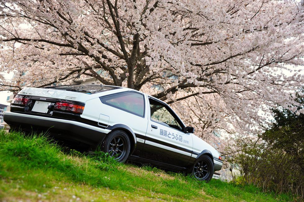Takumi Ae86 Trueno Poses In The Garden Of Sakura Cherry Blossoms