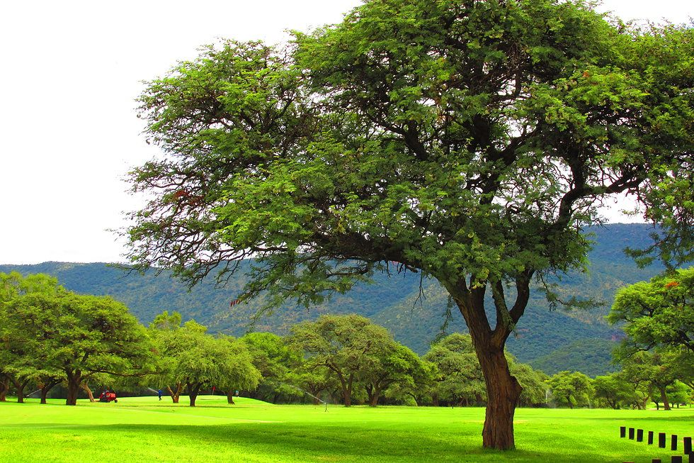 kameeldoring Google Search Landscape, Golf courses, Field