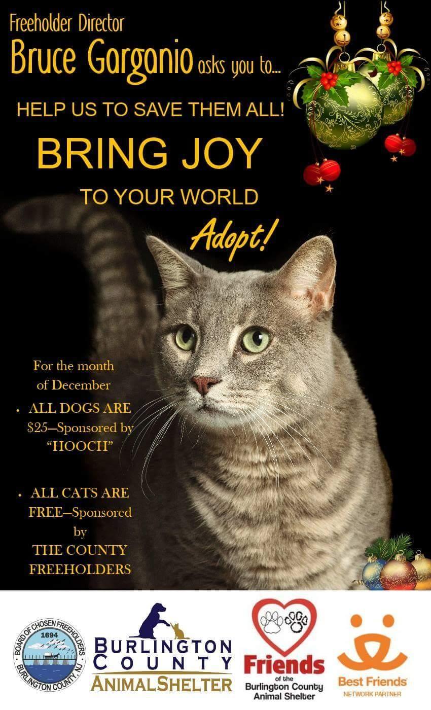 Kitten Kitten adoption, Cat adoption, Pets