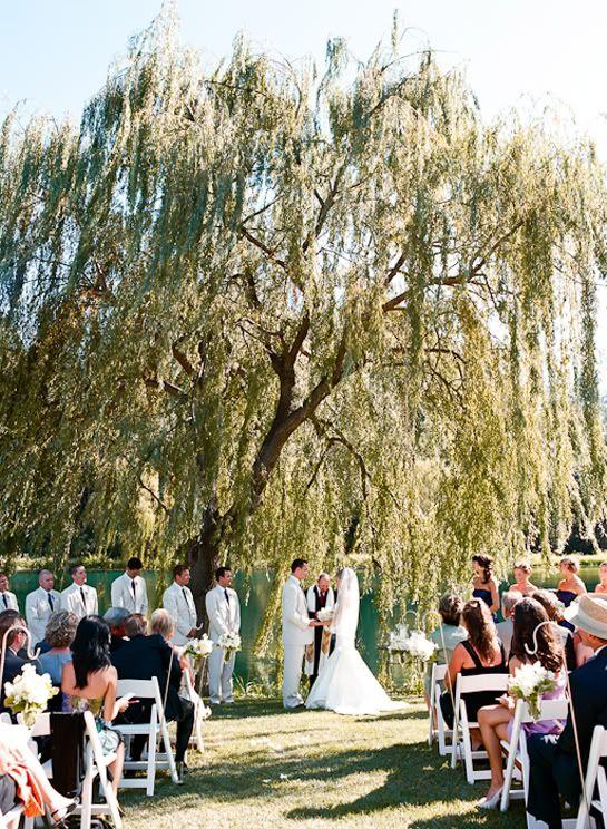 Outdoor Wedding Under Weeping Willow Tree
