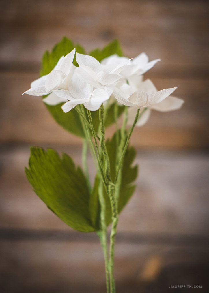 Crepe Paper Stephanotis Flower