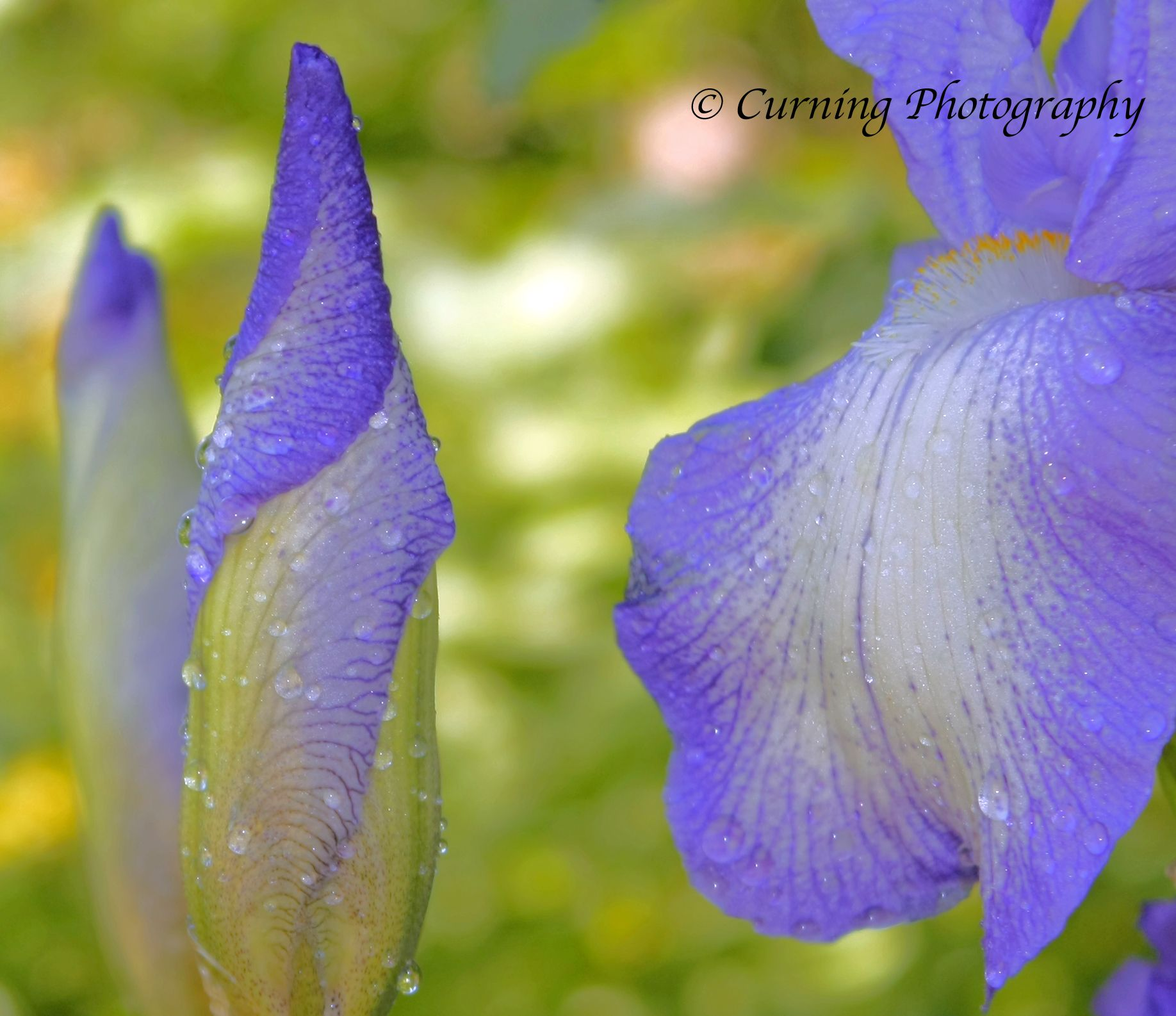 Pin by Curning Nature Photography on my photographs for