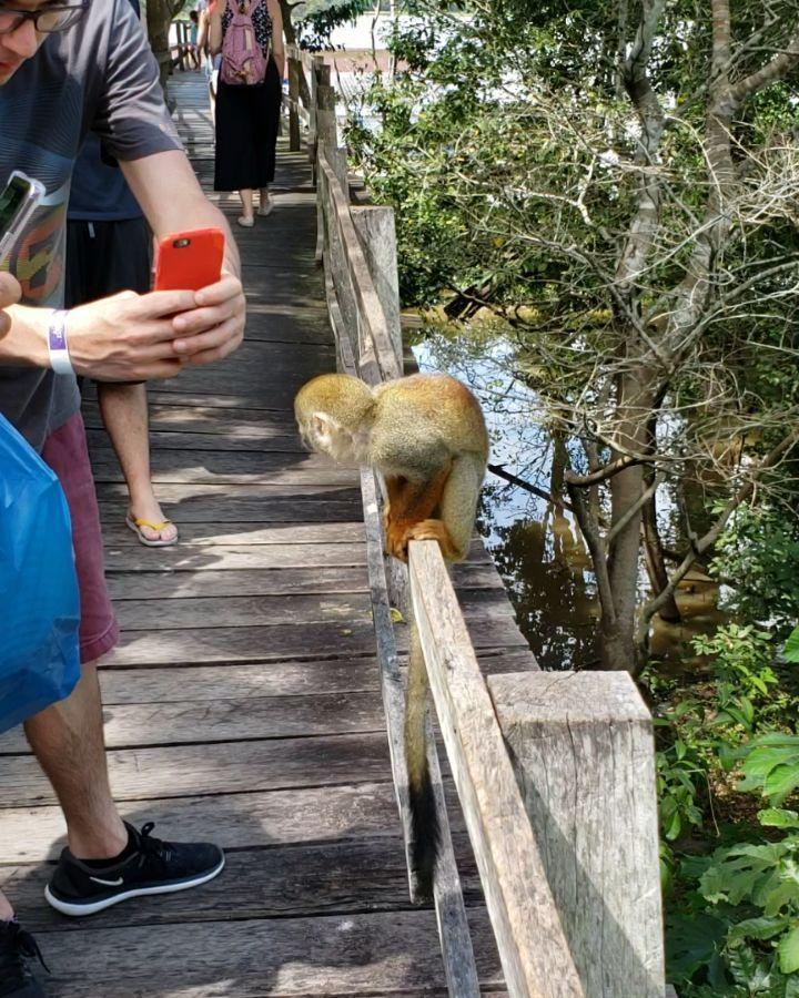SAFÁRI AMAZÔNICO: Visitantes na trilha para o lago de vitórias-régias #amazonjungle #amazonia #amazonjungle #amazonriver #norte #brazil #vitoriasregias #waterlilys #monkey #turismo #tourism