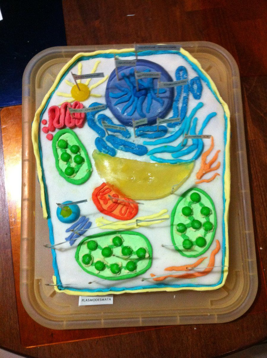 Famous edible plant cell model ideas images garden and landscape edible plant cell model plant cell model for kids to make pooptronica Images