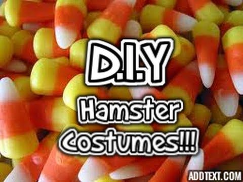 how to make a costume for your hamster